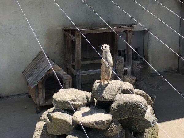 【市川市動植物園】子連れ必見!子供も大喜び!マイナー動物園の魅力!